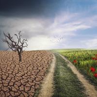 Зміна клімату може завадити Україні стати аграрною наддержавою
